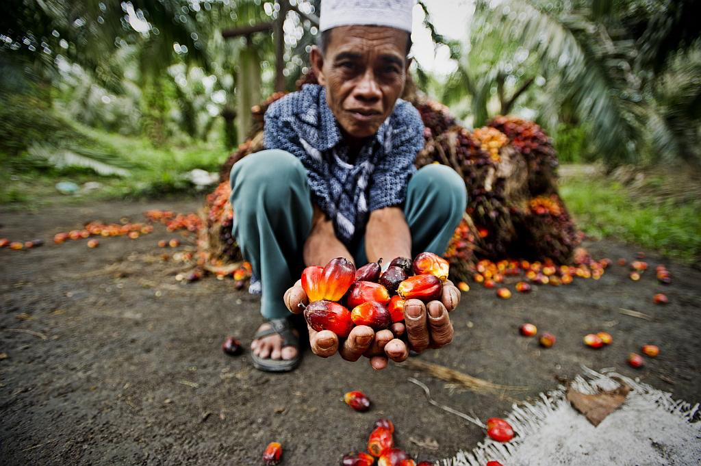 Palmöl Farmer