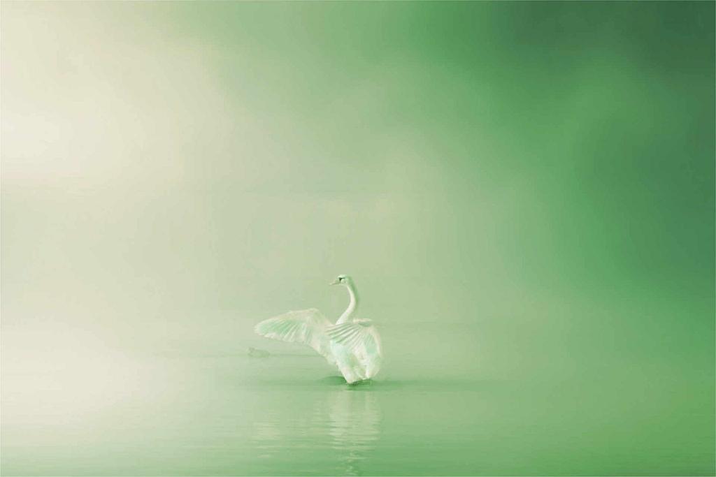 Grüner Schwan